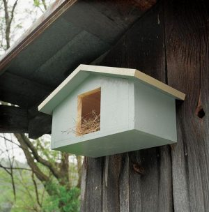 Mourning Dove Nesting Box Project Download-0