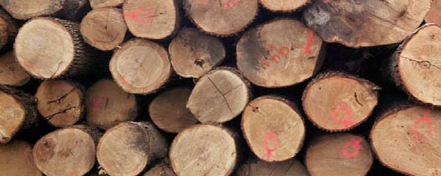 common-types-of-wood